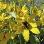 Jackson-Hole-Wildflowers-8