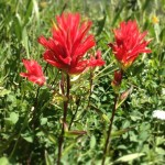 Indian Paintbrush, Behind the Scenes