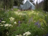tent-cabins-wildflowers