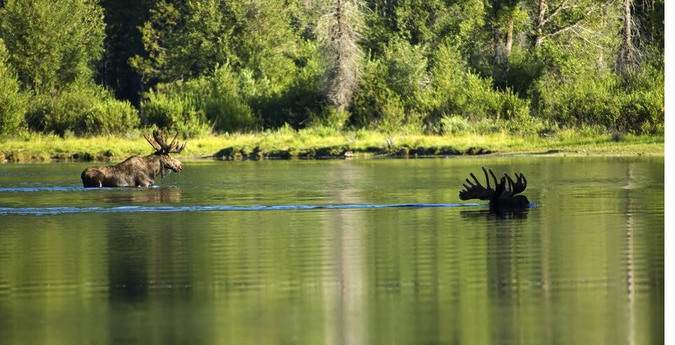 Snake River scenic float trip
