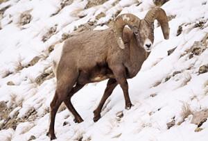 Jackson Hole Wildlife